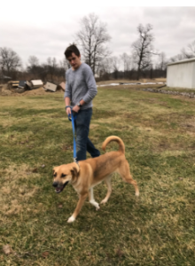 Senior Max Newport takes George on a short walk. George was adopted while Red Alert was at the shelter.